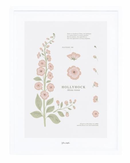 Affiche encadrée HollyHock