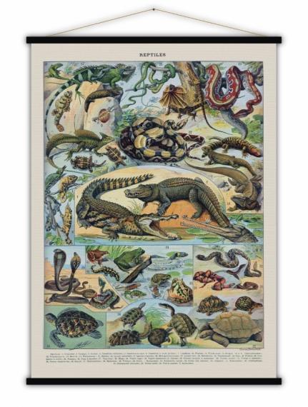 Affiche vintage Reptiles