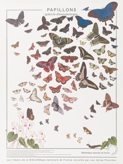 Planche Papillons