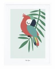 Affiche Encadrée Perroquet