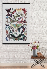 Affiche vintage Papillons