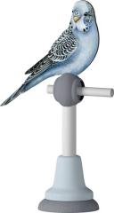Perroquet Azul