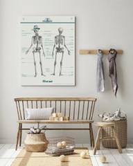 Planche Anatomie